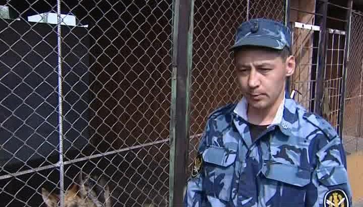 Сегодня кинологи ислужебные собаки Ставрополя отмечают день рождения собственной службы